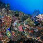 Indonésie - Plongée Amed