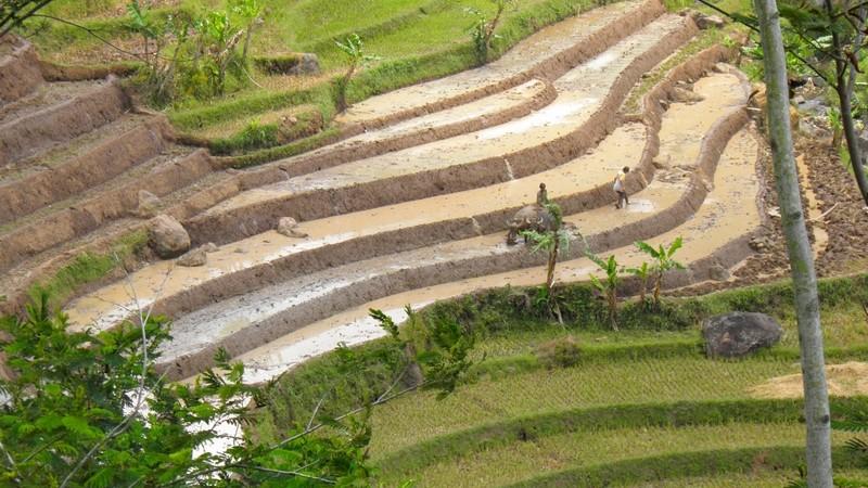 Indonésie - Selogryo