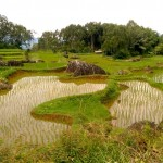 Rizieres - Toraja