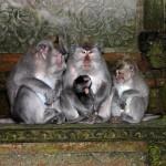 Indonésie - Forêt des singes Ubud