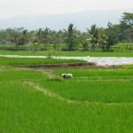 Indonésie - Village Borobudur