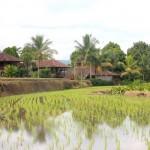 Indonésie - Bali - Munduk