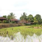Bali - Munduk