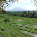 Indonésie - belimbing