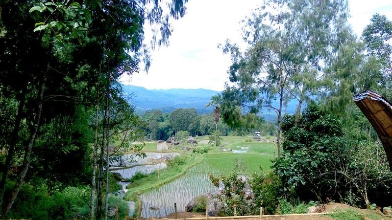 Toraja - Rizieres