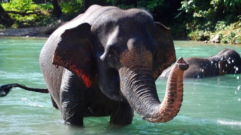 Sumatra - Elephant