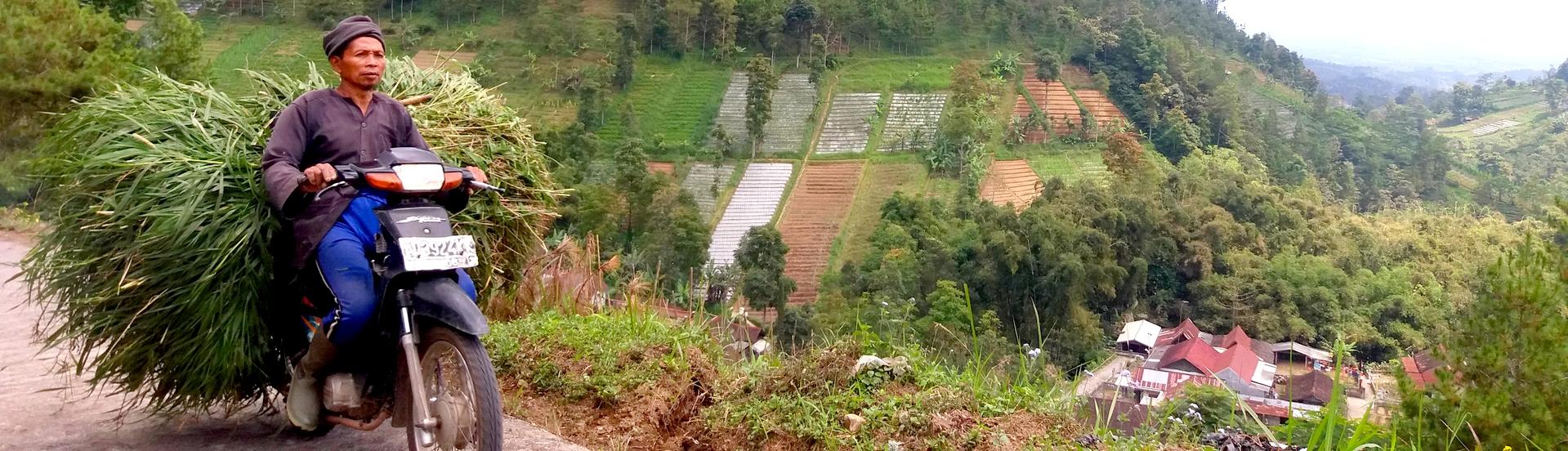 Tawangmanngu - Java - Indonesie